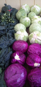 Cabbage at Underwood Farms.