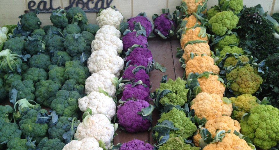 Broccoli & Cauliflower at Underwood Farms.